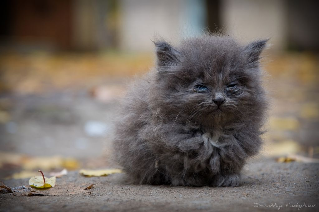 Фото котенок брошенный